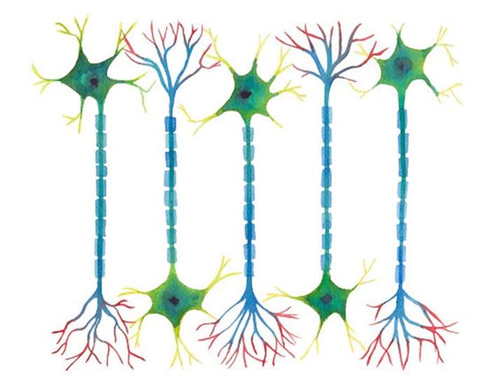 Imaginación, juego y neurodesarrollo